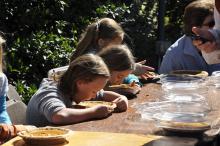 Cel-Kids gluten free pumpkin pie eating contest